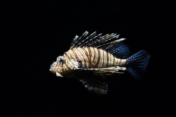 Ученые обнаружили 11 видов рыб, способных ходить