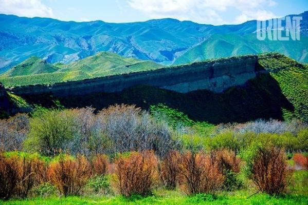 В рамках осенней озеленительной кампании будет увеличено количество саженцев деревьев и винограда