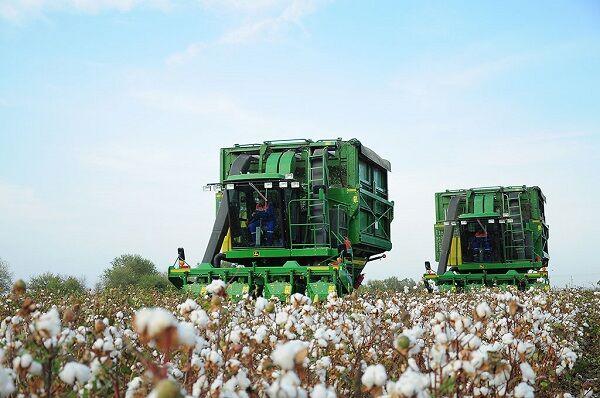 Хлопкоробы Туркменистана впервые собрали 1,25 миллиона тонн сырца