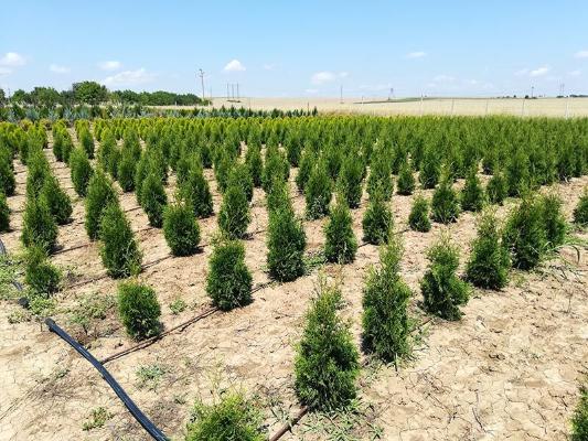 7 ноября в Туркменистане пройдёт всенародная акция по посадке деревьев