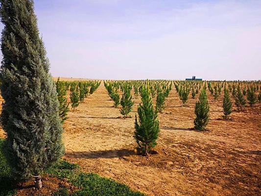Türkmenistanda Bitaraplygymyzyň 25 ýyllygy mynasybetli 25 million agaç nahallary ekiler