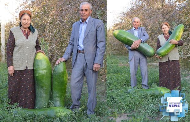 Türkmen daýhany äpet hyýar ösdürip ýetişdirdi