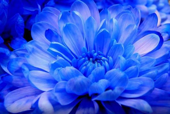 Ученые рассказали, как в природе возник синий цвет
