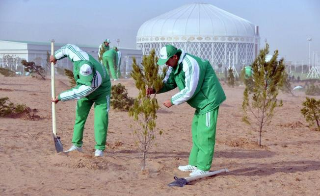 В Туркменистане высадят 30 миллионов деревьев в честь 30-летия независимости