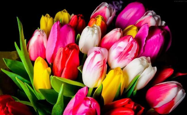 Сегодня мир отмечает «Международный женский день»