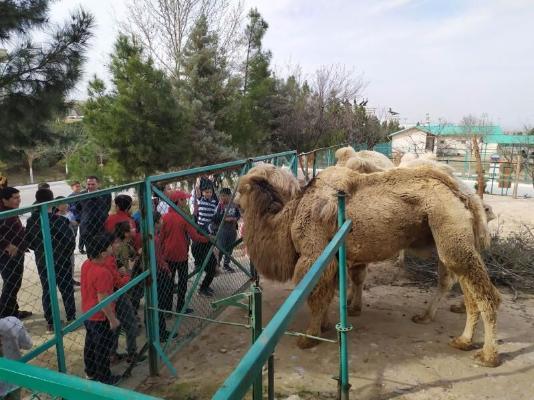 Зоопарк в Ашхабаде открыт для посетителей