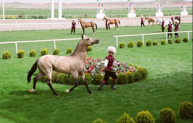 Конкурсы в честь Национального праздника туркменского скакуна состоятся 24 апреля