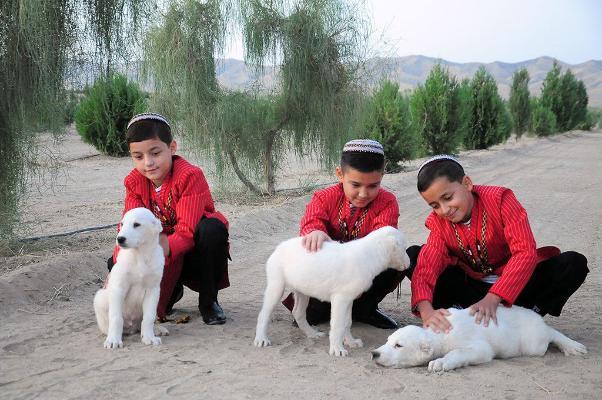 В Ашхабаде открылся Центр Международной ассоциации ахалтекинского коневодства и Международной ассоциации «Туркменские алабаи»