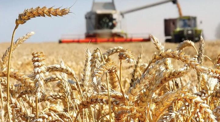 Подписано Постановление об организованном проведении жатвы зерновых