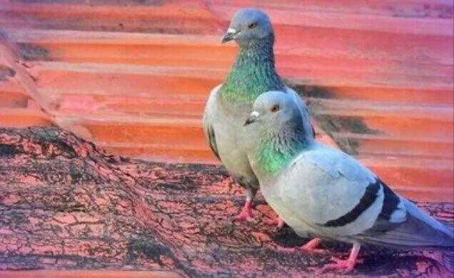 Ученые подсчитали количество птиц, обитающих на планете