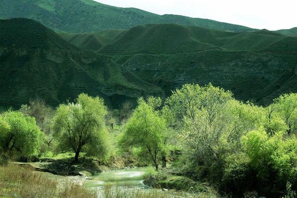 В Туркменистане утверждена Национальная лесная программа на 2021–2025 годы