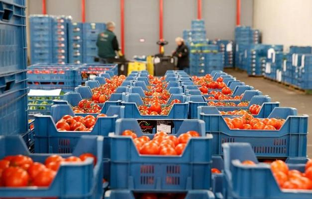 Экспорт плодоовощной продукции из Туркменистана в Россию вырос на 93%