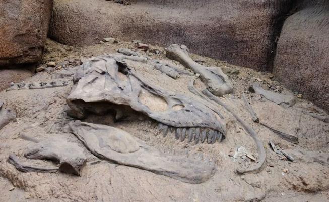 Özbegistandaky Gyzylgum çölünde dinozawryň galyndylary ýüze çykaryldy