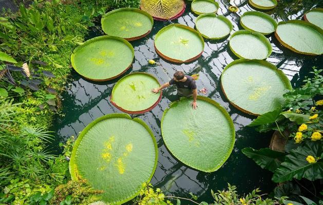 Britaniýanyň botanika bagy ösümlikleriň sany boýunça dünýä rekordynyň eýesi boldy
